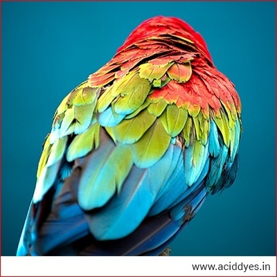 acid dyes for feathers